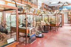 Innenraum des zoologischen Museums von Klausenburg Lizenzfreie Stockfotografie