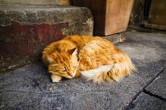 Innenstadt-Katze in Sydney Stockbild