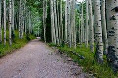 Inner Basin Trail Stock Photo