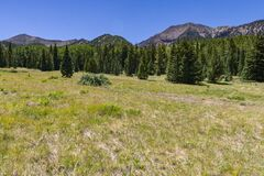 Inner Basin Trail No. 29 royalty free stock images