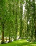 Inner city park in summer. Sun through mature trees in an inner city park in high summer Royalty Free Stock Images