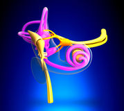 Inner Ear Anatomy on blue background Stock Images