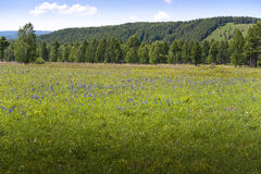 Inner Mongolia. Grassland, forest and mountains in Inner Mongolia Stock Photography