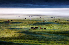 Inner Mongolia dam herd clouds Royalty Free Stock Image