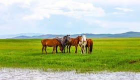 Inner Mongolia grassland Stock Image
