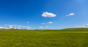 Inner Mongolia grassland. Inner Mongolia prairie, fresh green and picturesque, endless, especially to the north of the Hulun Buir is the center of the stock image
