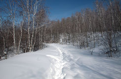 The winter snow Royalty Free Stock Photography
