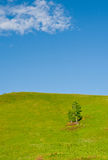 Inner Mongolia Hulun Buir grassland scenery Royalty Free Stock Images