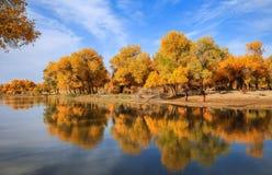 Inner Mongolia Kina Royaltyfri Bild