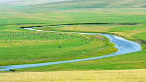 Inner mongolia pasture. There are many livestocks on inner mongolia pasture Stock Photo