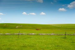 Inner Mongolia pasture Stock Photography
