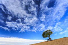 Inner Mongolia Weng Niu Bengtsson Tree Hill Nature Royalty Free Stock Images