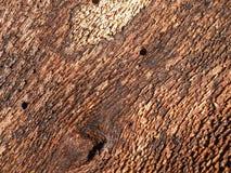 Inner side of the tree bark stock image