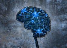 Innere menschliche Neurologie Stockbild