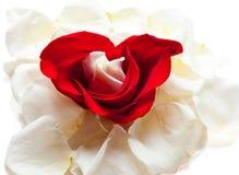 Innere und Rosen stockfotografie
