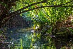 Innerer Dschungel Lizenzfreie Stockfotos
