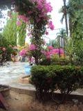 Innerer Minigarten am heißen Sommertag Stockfoto