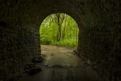 Innerer Tunnel zum Holz Stockfotografie