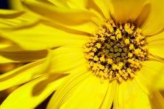 Inneres der Blume Lizenzfreie Stockfotos