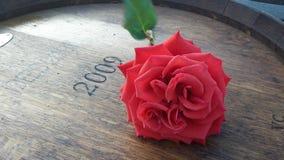 Inneres einer Rose lizenzfreie stockbilder