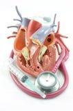 Inneres und Stethoskop Stockfotos