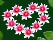 Inneres von den Blumen lizenzfreie stockfotos