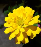 Innerhalb der Blume lizenzfreies stockbild