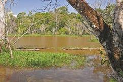 Innerhalb des Amazonas-Dschungels Lizenzfreies Stockbild