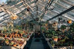Innerhalb des Gewächshauses an den Wellen-Hügel-allgemeinen Gärten, im Bronx, New York City stockbild