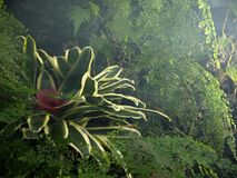 Innerhalb des Konservatoriums: Bromelieanlage und grüner Hintergrund des Venushaarfarns Stockbilder
