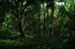Innerhalb des tropischen Vordschungels lizenzfreies stockfoto
