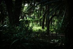 Innerhalb des tropischen Vorwaldes lizenzfreies stockfoto
