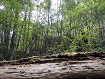 Innerhalb des Waldes Lizenzfreies Stockfoto
