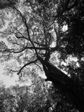 Innerhalb des Waldes Stockfoto