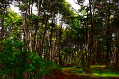 Innerhalb des Waldes Lizenzfreie Stockbilder