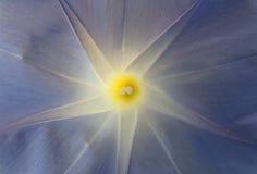 Innerhalb einer blauen Blume Stockfoto