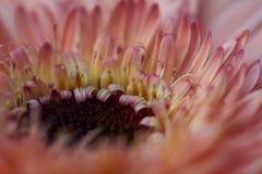 Innerhalb einer Blume Stockbild