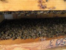 Innerhalb eines Bienenstocks Stockfotos