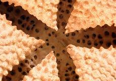 Innerhalb eines Starfish Lizenzfreie Stockfotos