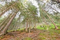Innerhalb eines Waldes stockfotografie