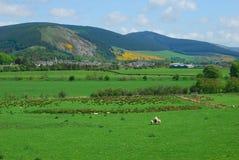 Innerleithen en el valle del tweed fotos de archivo libres de regalías