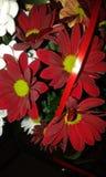 Inni czerwień kwiaty Fotografia Royalty Free