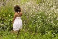 Innocence. Little girl picking flowers in a field Royalty Free Stock Photos