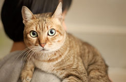 Innocent cat Stock Photography