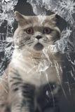 Innocent Cat looking thru a broken Window Stock Photography
