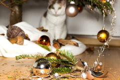 Innocent cat. A cat looks innocent at broken christmas decoration Royalty Free Stock Photography