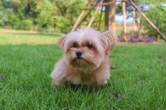 Innocent Dog Royalty Free Stock Photo
