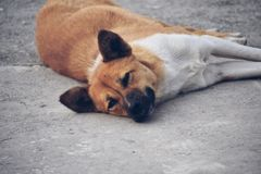 Innocent dog royalty free stock image