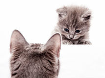Innocent kitty. Looking his mother isolated Royalty Free Stock Images