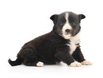 Innocent puppy Royalty Free Stock Photos